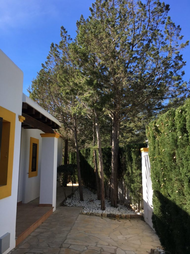 Exterior Ibiza Trees Villa Tall Outside