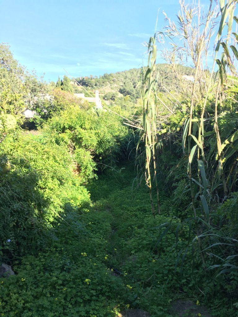 Finca Old Rustic Potential Rennovation Character Garden View Outdoor Front Door Terrace Ibiza Jesus
