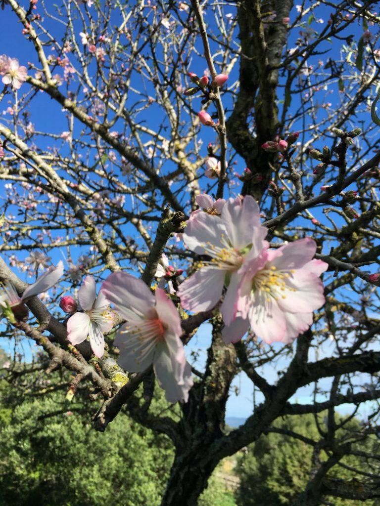 Flower Tree Blossom Ibiza Villa