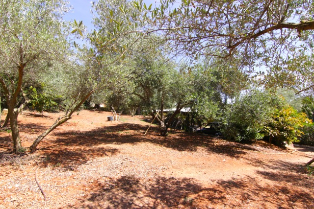 Forest Ibiza Villa Land