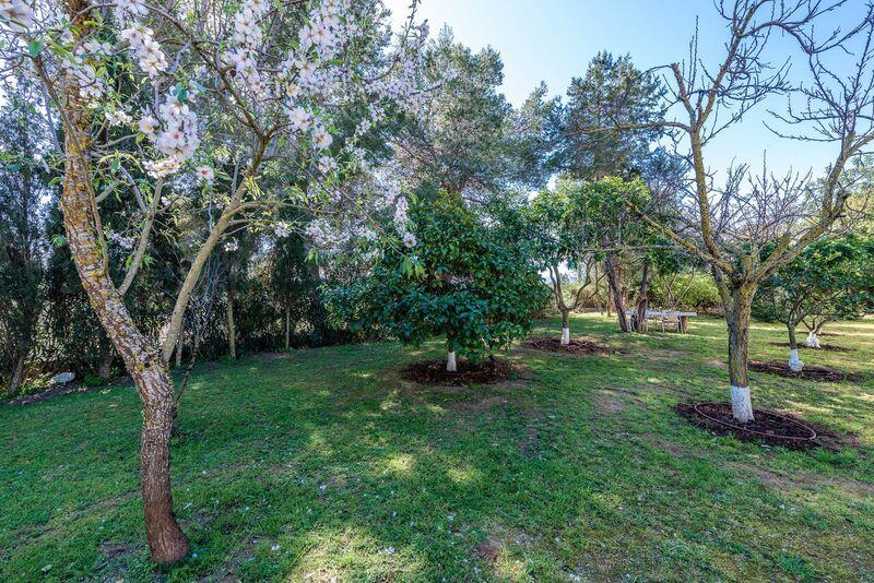 Green Garden Almond Blossom Ibiza Villa