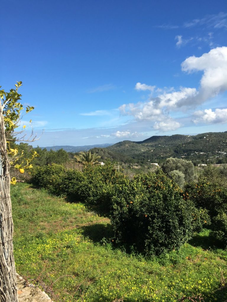 Ibiza Gorgeous Clouds Green Countryside Garden Villa
