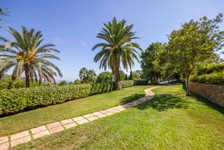 Ibiza Luxury Properties Porroig Palm Trees