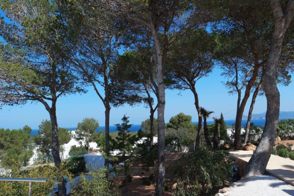 Plant Pool Blue Sky Ibiza Villa Forest