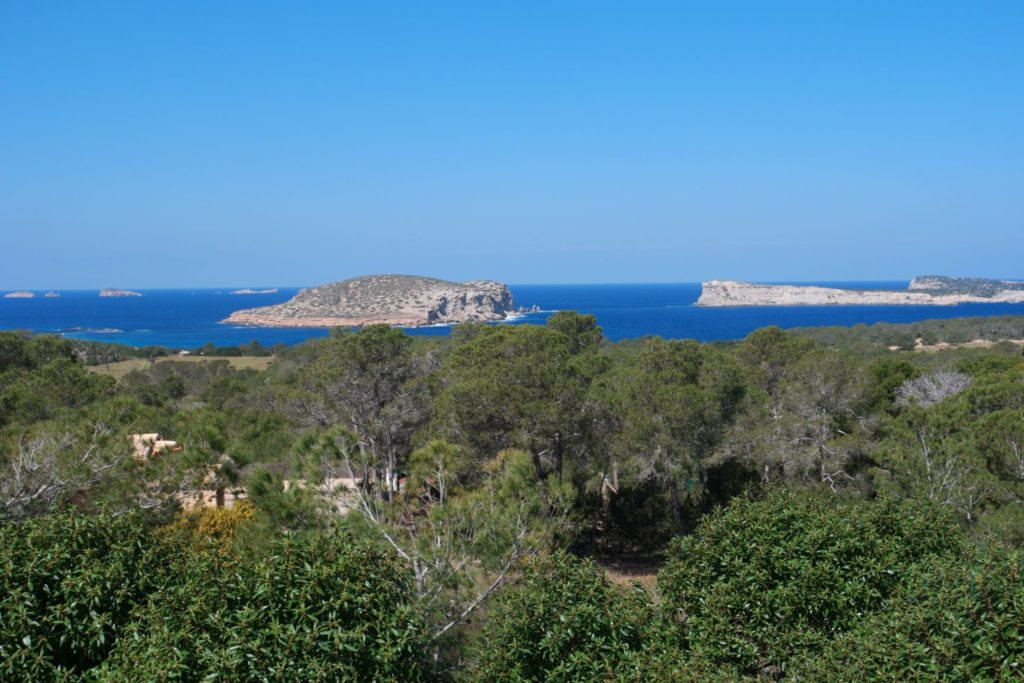 Plant Pool Ibiza Villa Sea Trees View