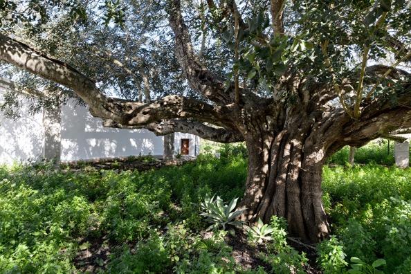 Tree Green Garden Villa Ibiza