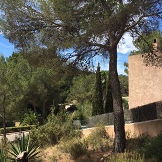 Trees Forest Villa Ibiza