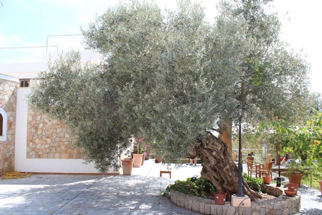 Trees Large Parking Garden Villa Ibiza