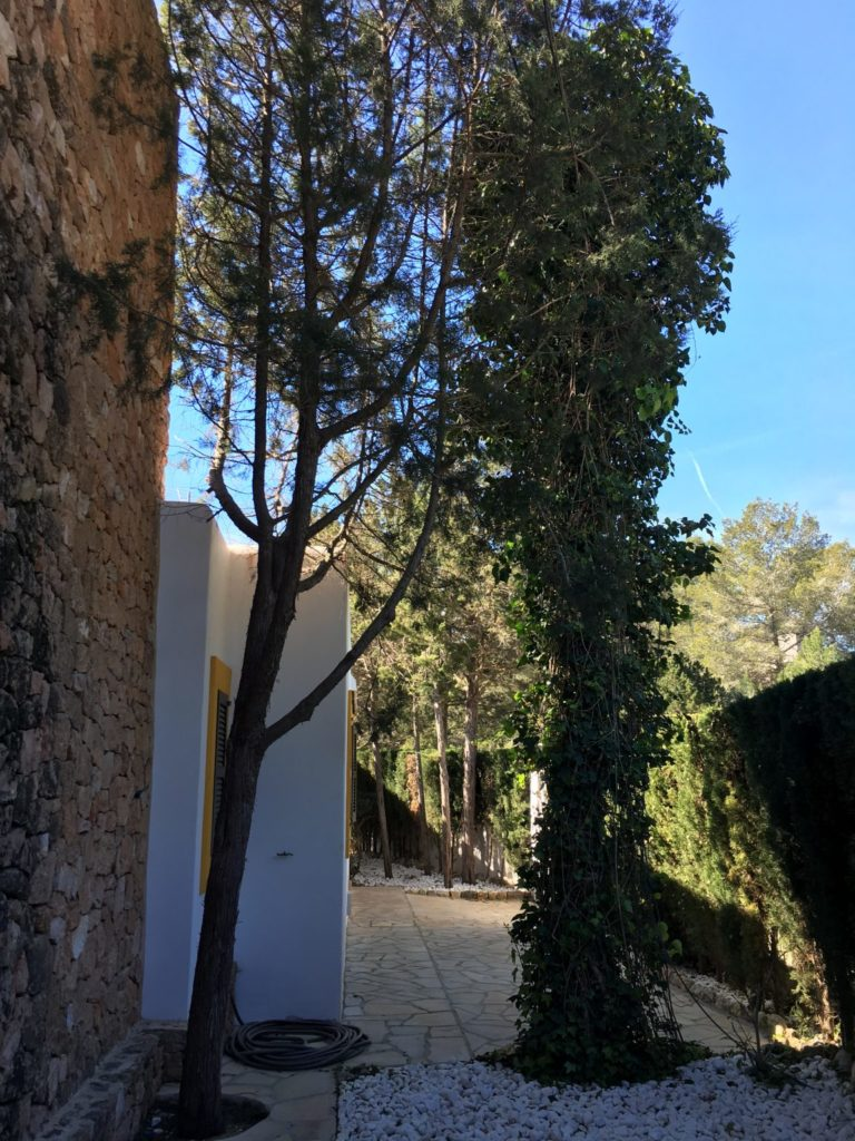 Trees Villa Tall Outside Exterior Ibiza