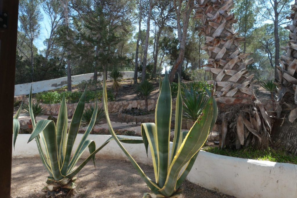 Villas In Ibiza Spain With Garden
